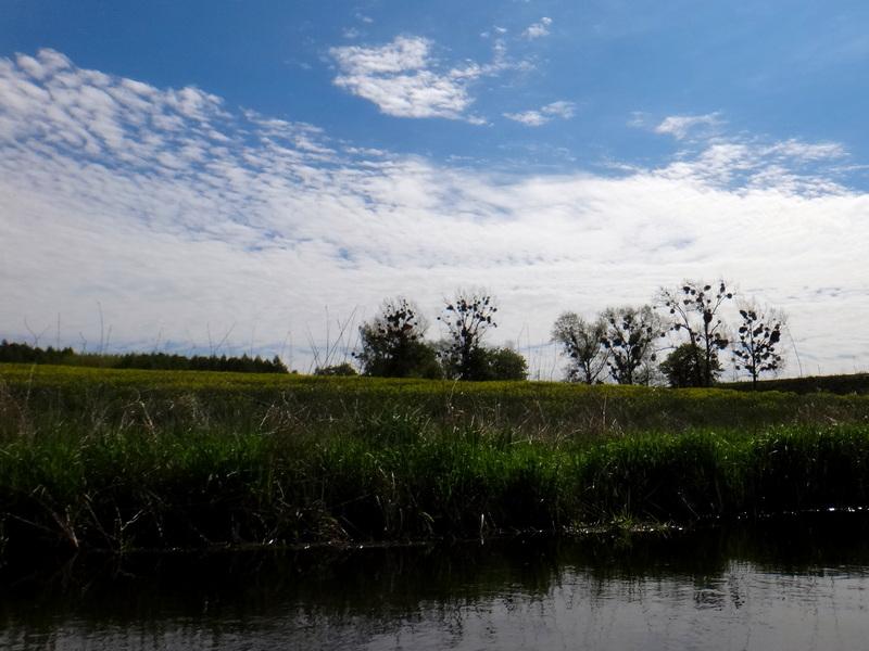 Sielskie krajobrazy podczas spływu kajakowego po Liwie.