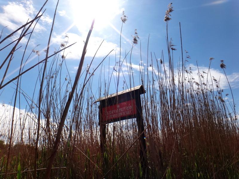 Rezerwat przyrody Liwieniec.