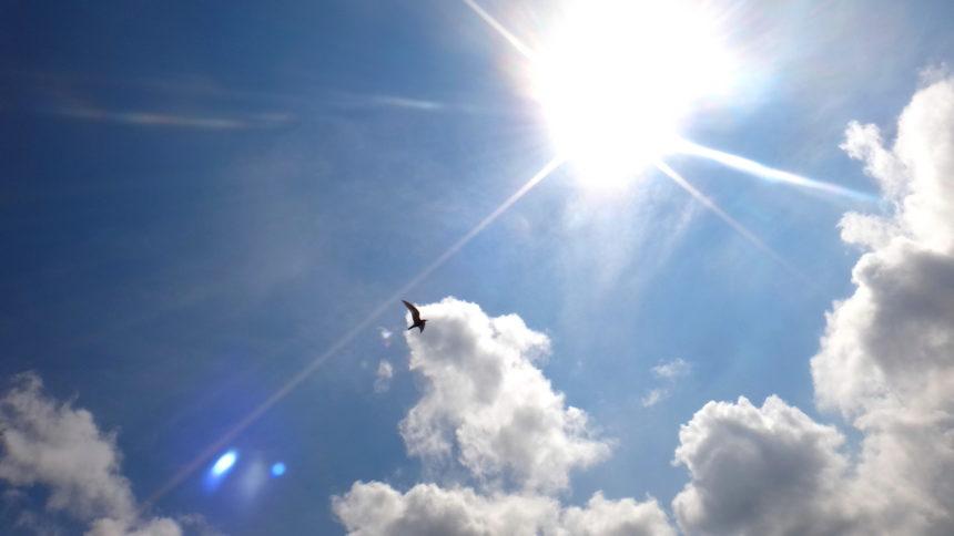 Ptak szybujący nad Druznem