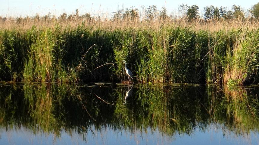 Brzegi jeziora Druzno z pokładu hausbota