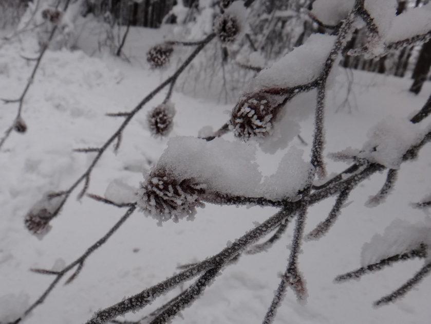 Beskid Śląski zimą. Zimowy krajobraz na Czantorii.
