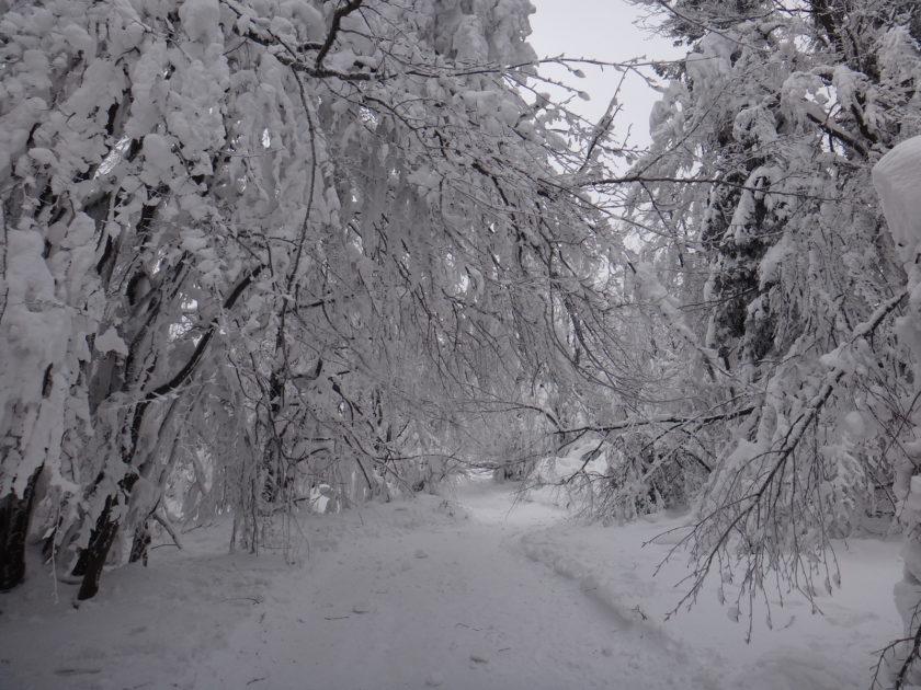 Beskid Śląski zimą. Śniezna kraina na Czantorii.
