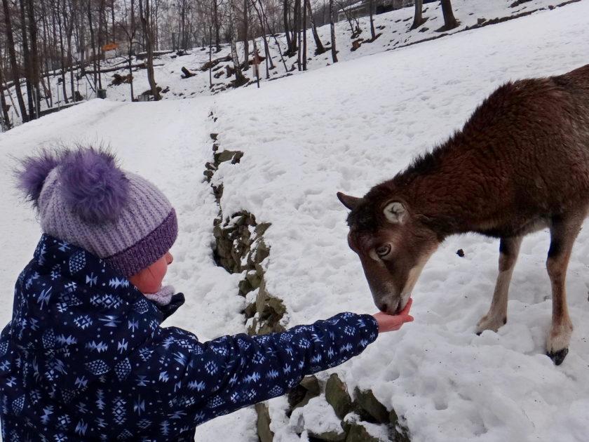 Beskid Śląski zimą. Leśny Park Niespodzianek. Karmienie zwierząt.