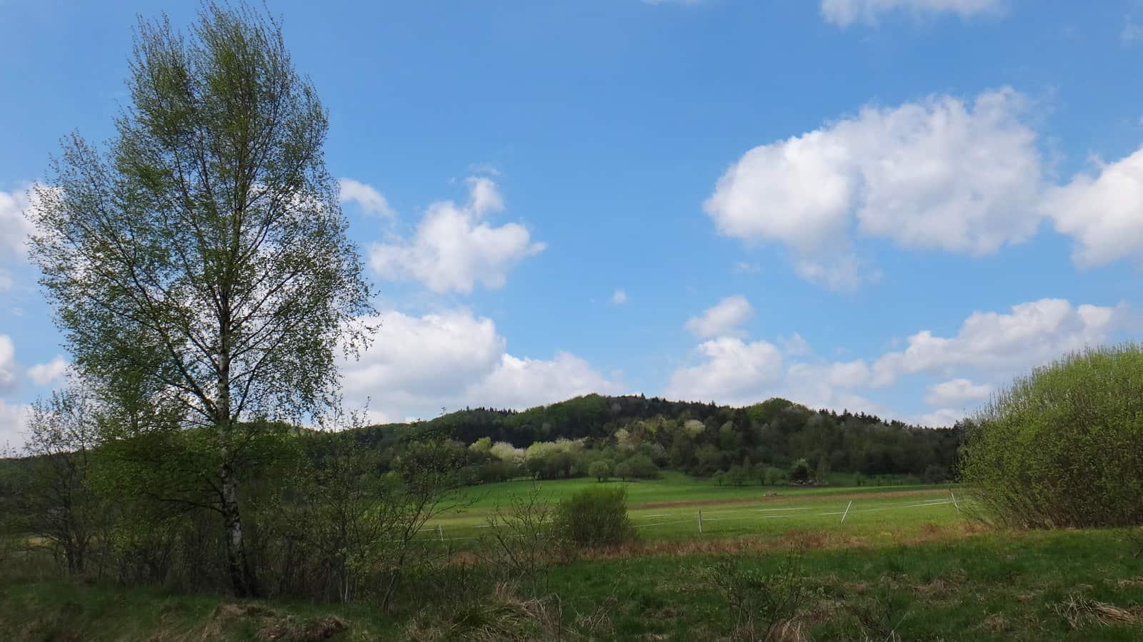 Widok na Beskid Niski z zielonego szlaku na Cigelkę.