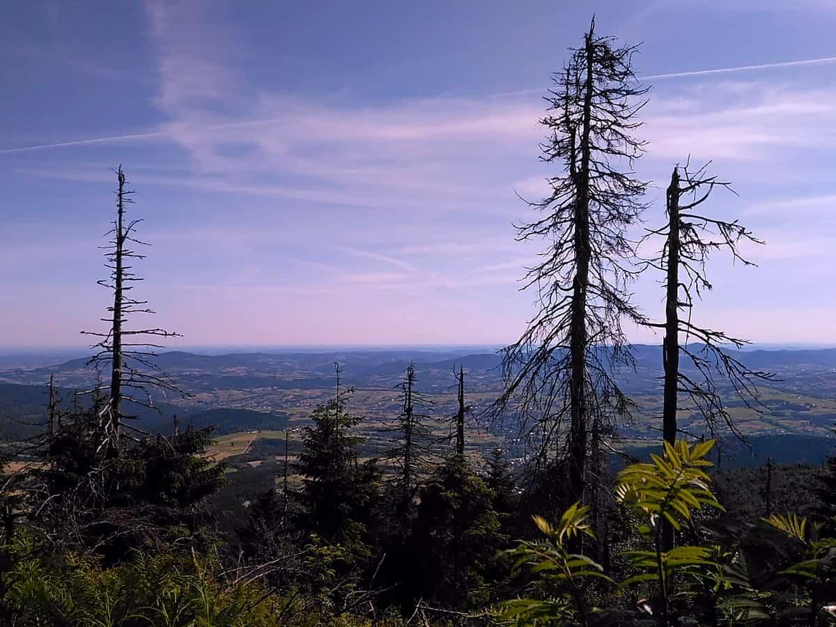 Mogielica - najwyższy szczyt Beskidu Wyspowego