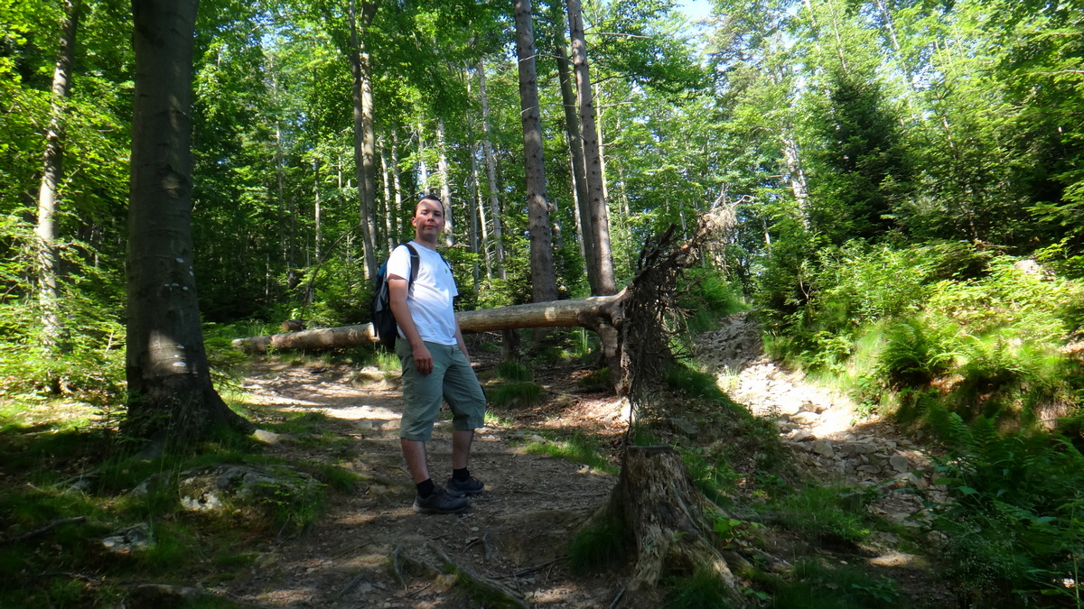 Leśna ścieżka na Mogielicę.