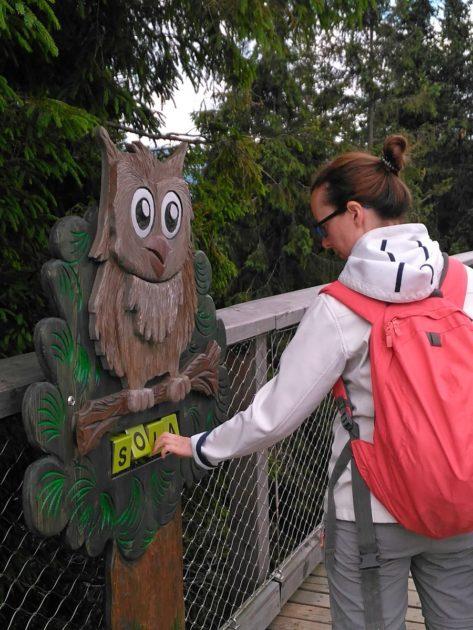 Układanka - Atrakcje dla dzieci na ścieżce wśród koron drzew