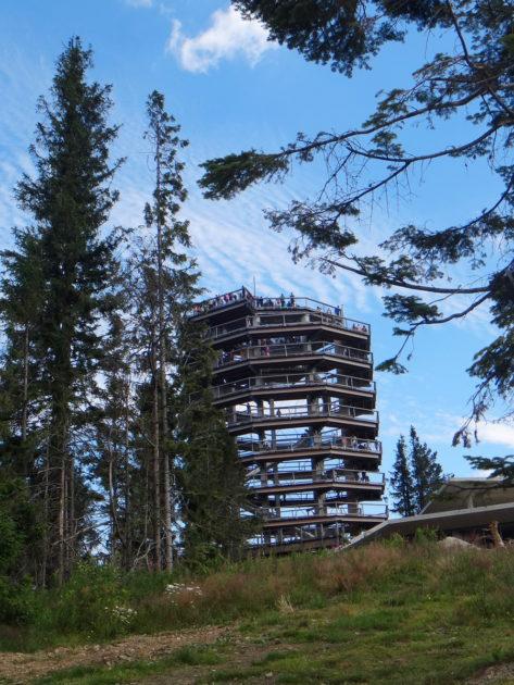 Ścieżka wśród koron drzew - wieża widokowa.