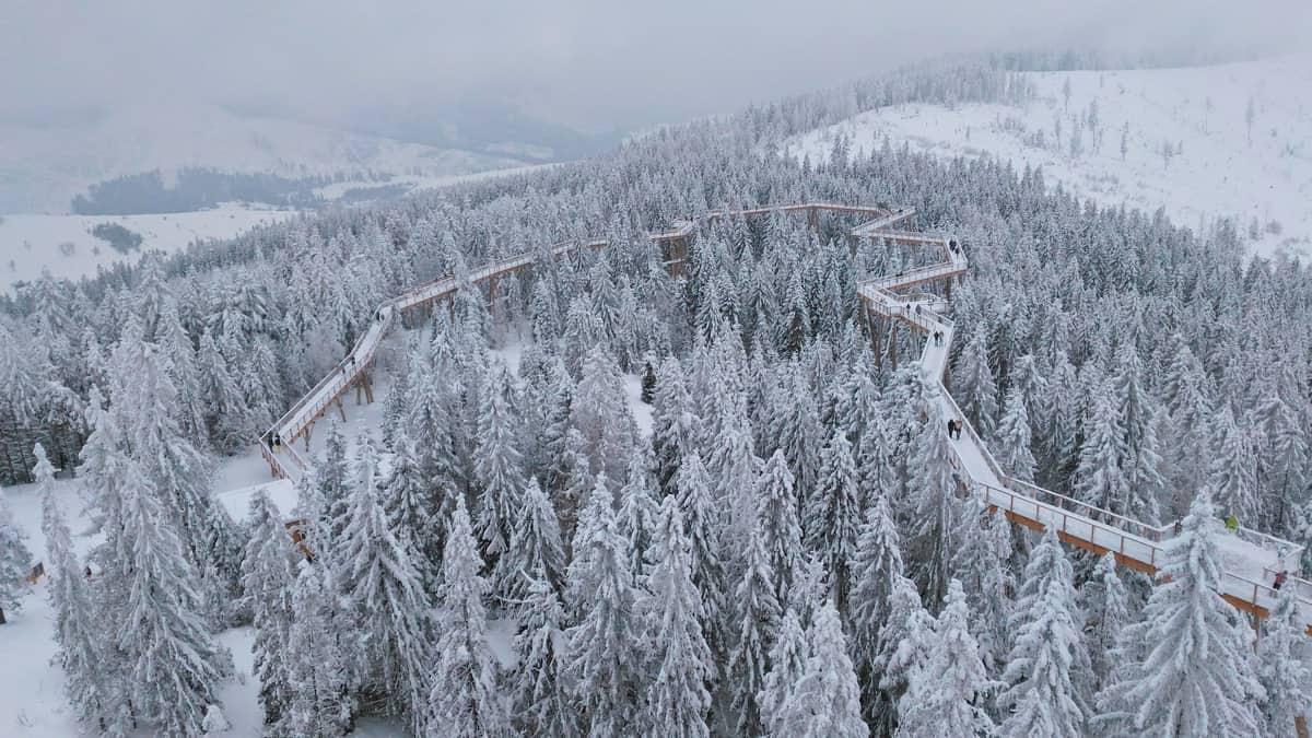 Widok z wieży widokowej na ścieżkę wśród koron drzew w zimie.