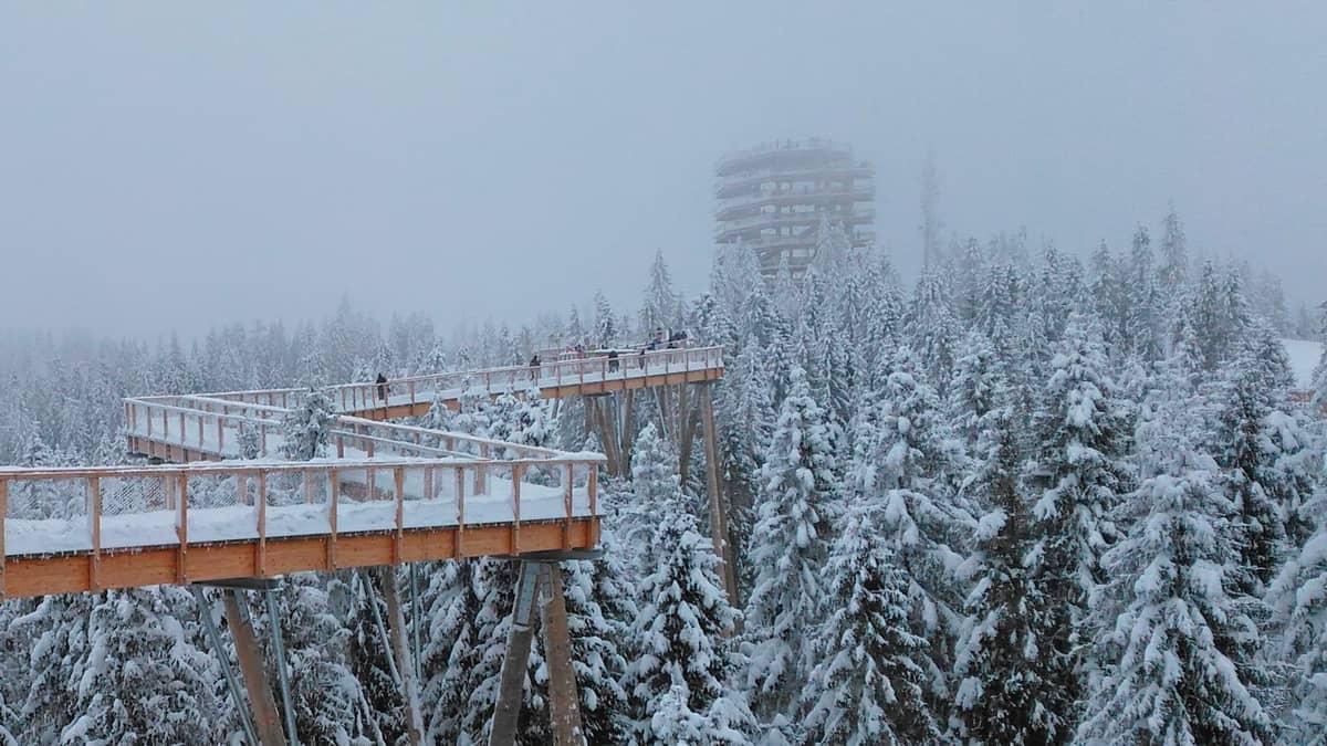 Ścieżka wśród koron drzew w zimowej szacie.