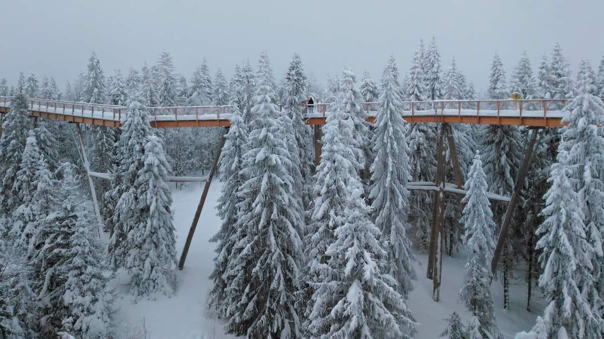 Ścieżka wśród koron drzew w zimie.