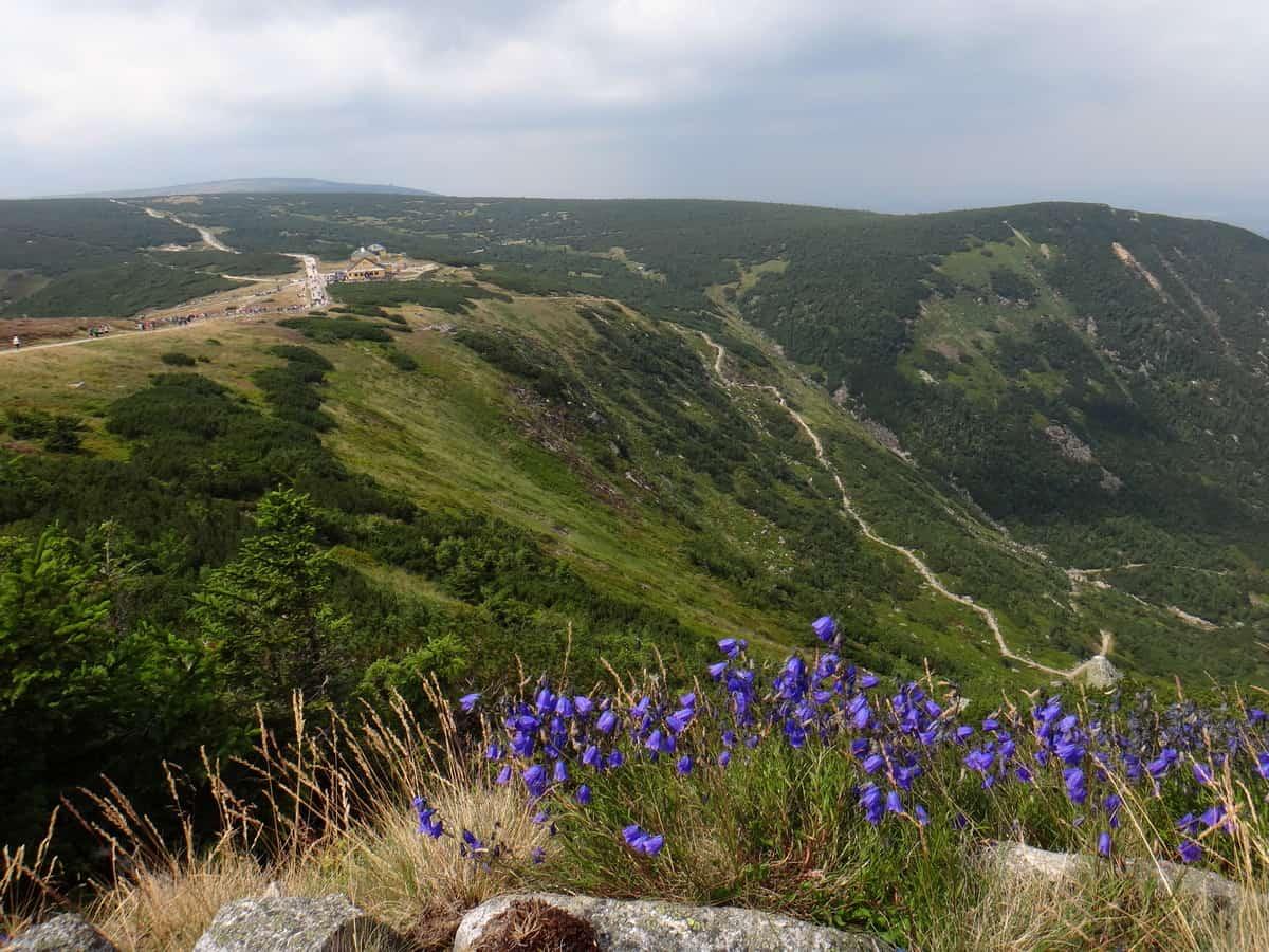 Widok na główny grzbiet Karkonoszy z Drogi Jubileuszowej.