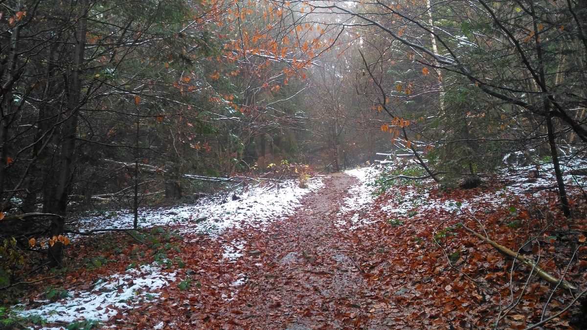 Pierwszy śnieg w sezonie 2019/2020.