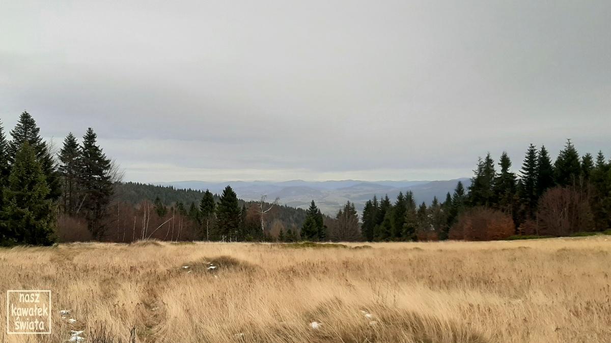 Łopień. Widok z polany Widny Zrąbek.