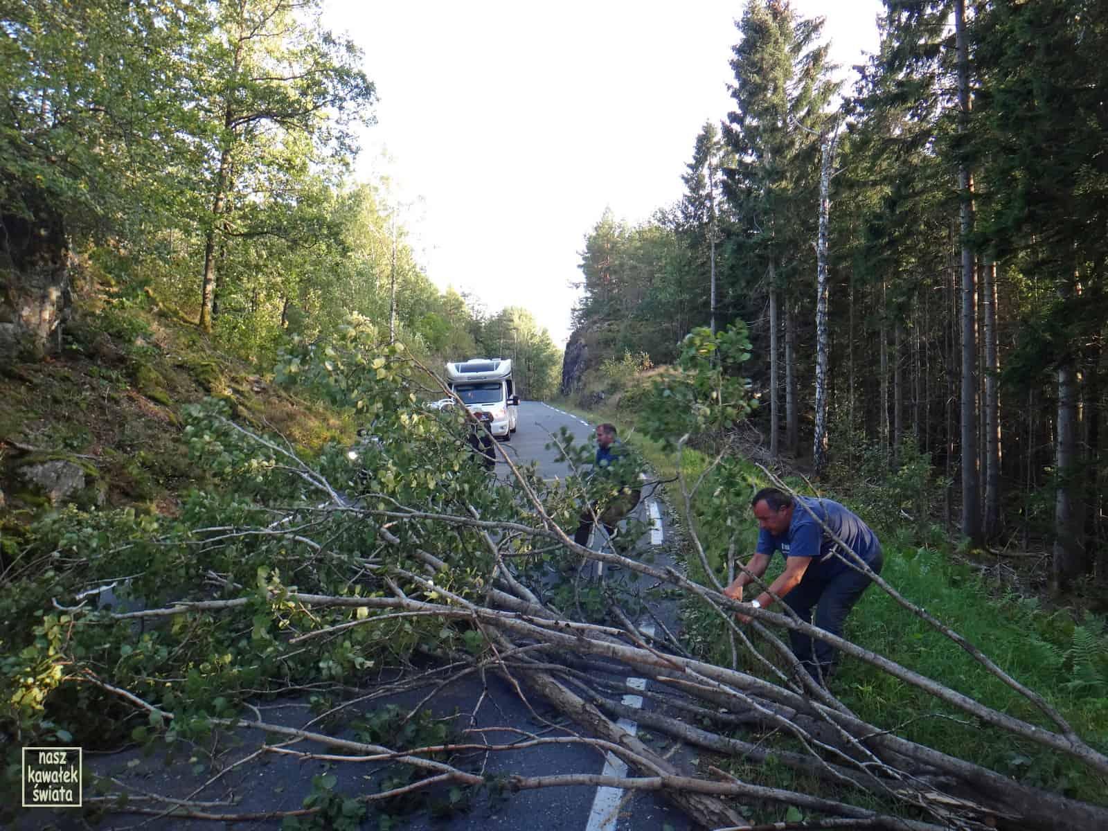 Powalone drzewo zagradza drogę.