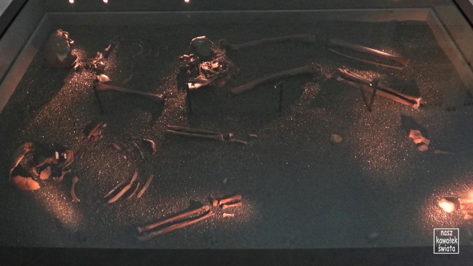 Szczątki kobiet znalezione na łodzi z Osebergu.