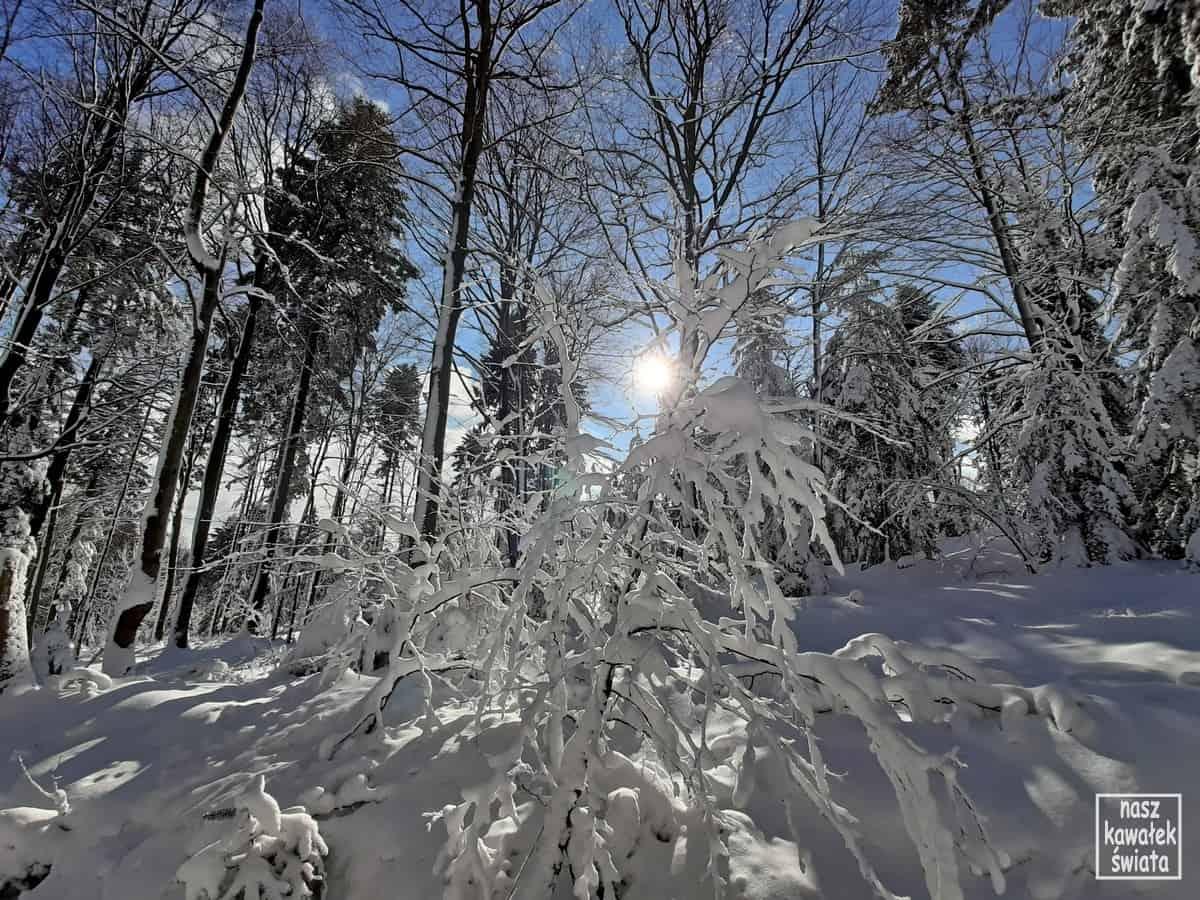 Zima na Magurze Małastowskiej.