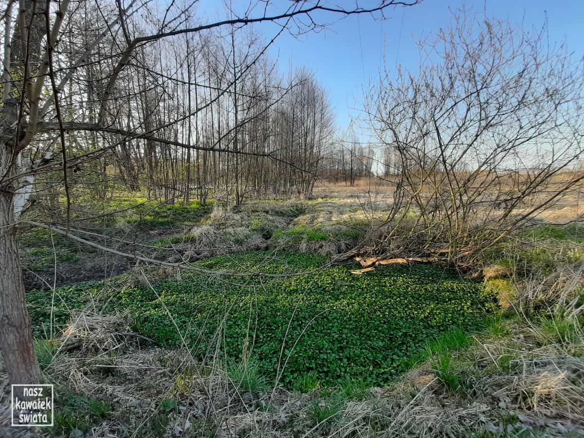 Iwanowice. Dolina Dłubni. Dłubniański Park Krajobrazowy.