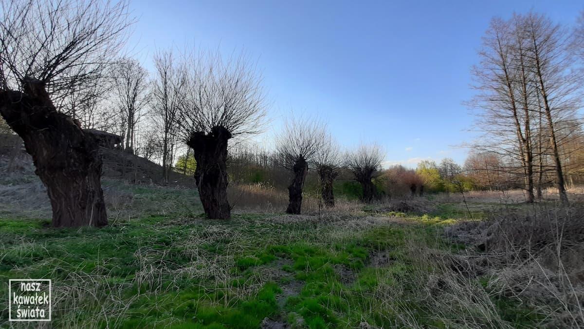 Dolina Dłubni w Iwanowicach. Dłubniański Park Krajobrazowy.