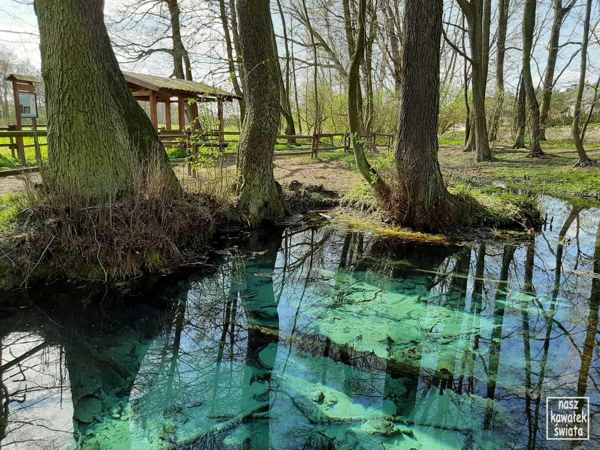 Źródło Jordan. Dolina Dłubni. Dłubniański Park Krajobrazowy
