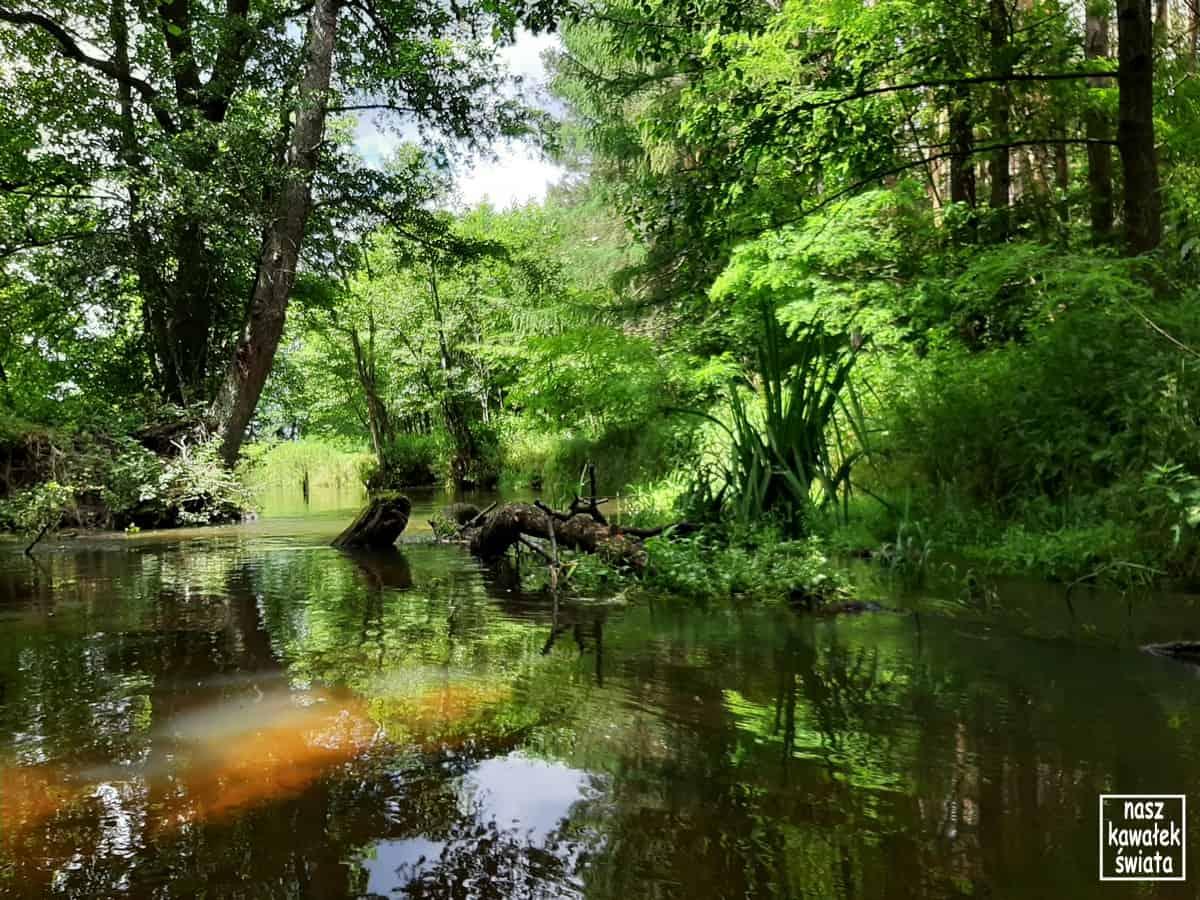 Rzeka Wieprz poniżej Bondyrza.