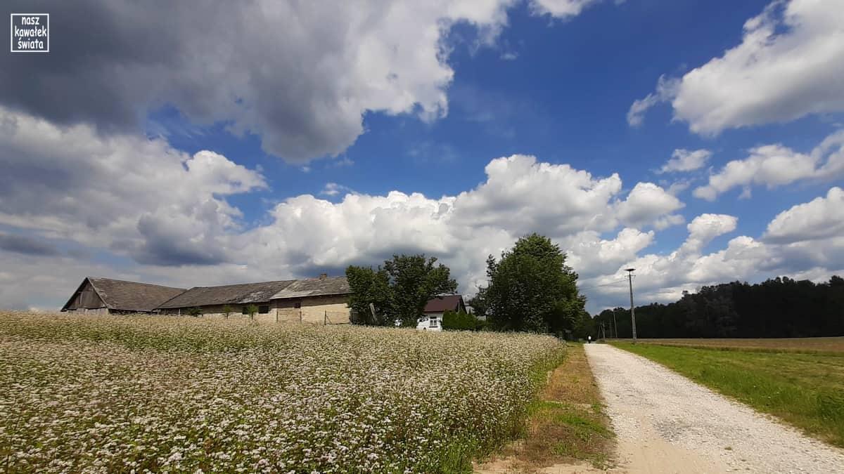 Roztocze. Krajobraz okolic Radruża.