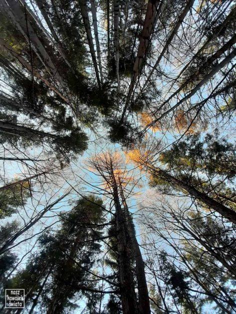 Las w Beskidzie Śląskim, przy drodze na Skrzyczne