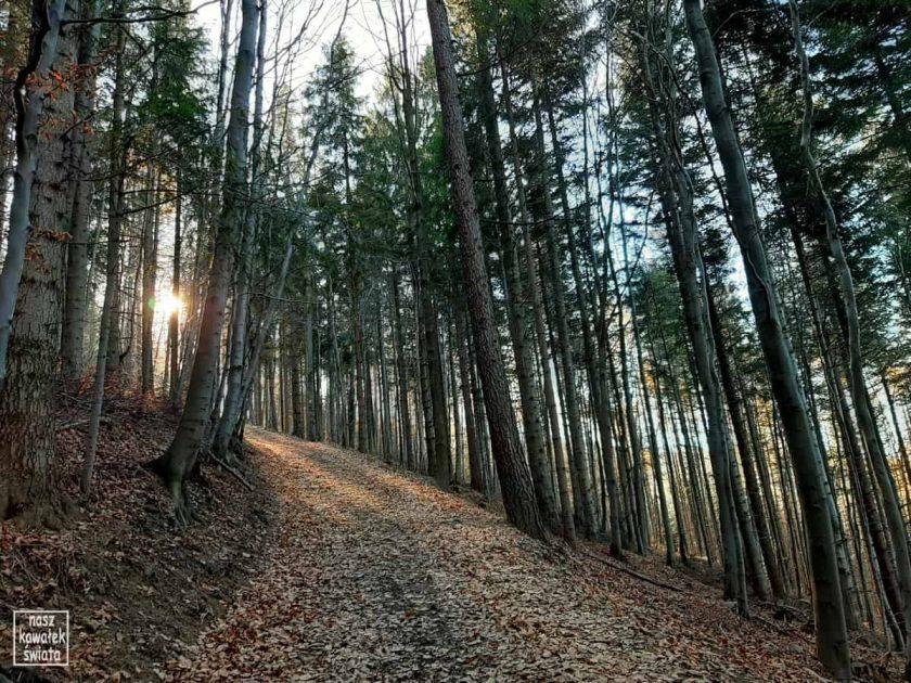 Beskidzki las jesienią