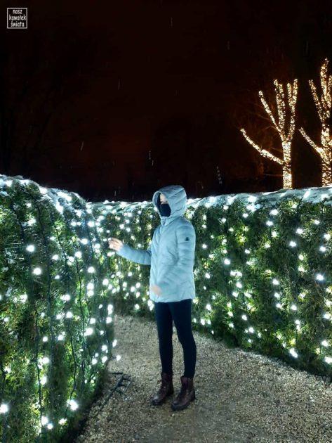 Ogród świateł Alicja w Krainie Czarów - labirynt