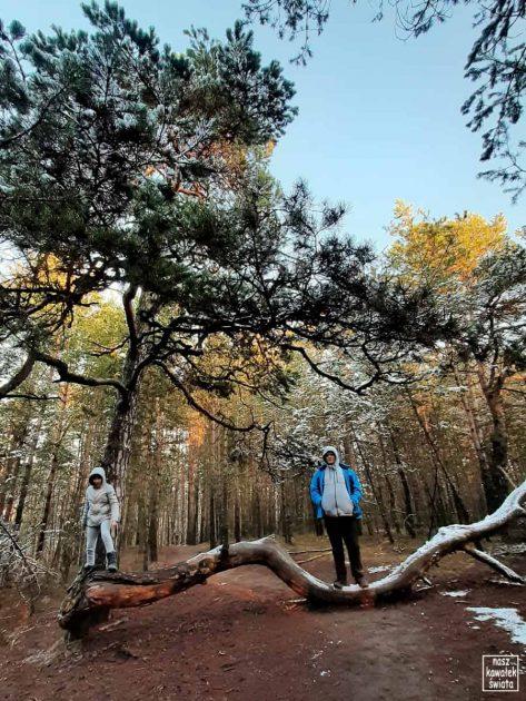 Spacer po lesie nad Sztołą