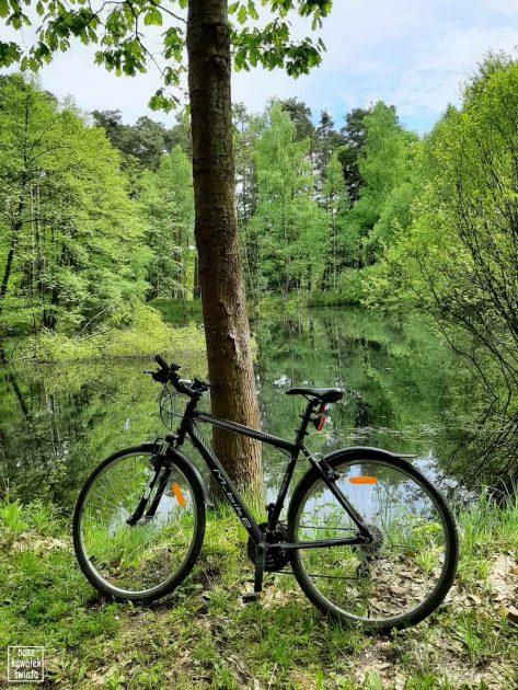 Rower w Puszczy Niepołomickiej