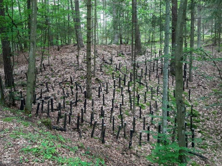 Land Art przy drodze do Florianki